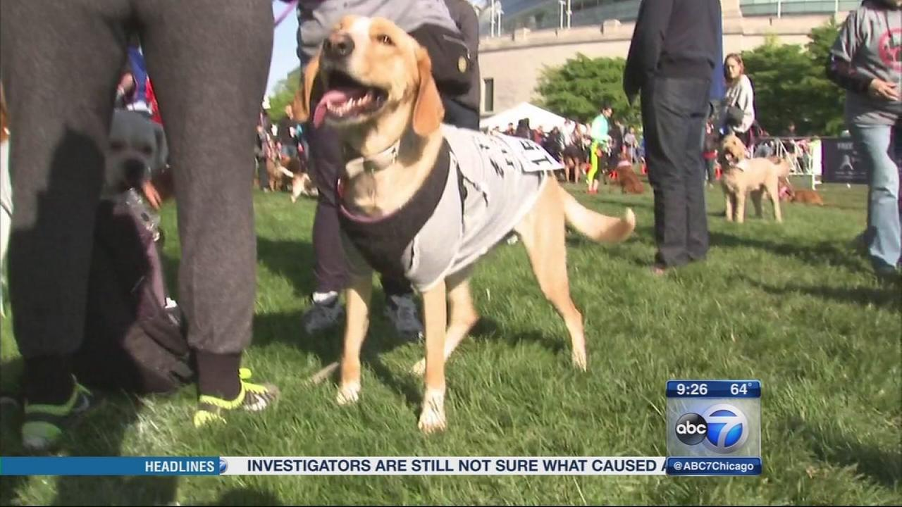 Bark in the Park at Soldier Field