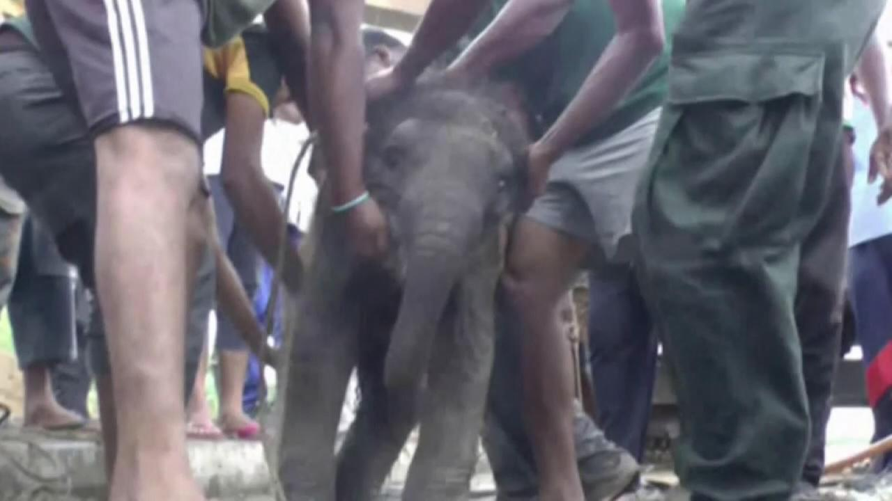 Elephant rescued from hole in Sri Lanka