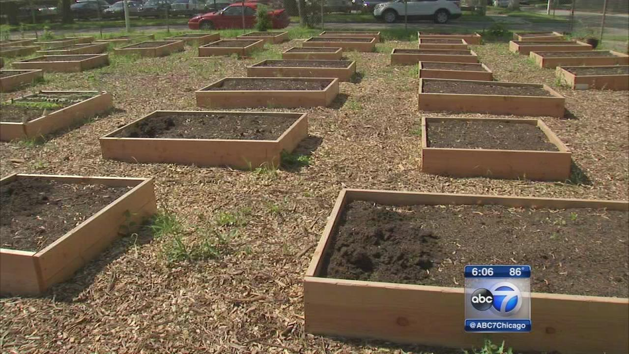 Chicago students turn parking lot into meditation garden for veterans