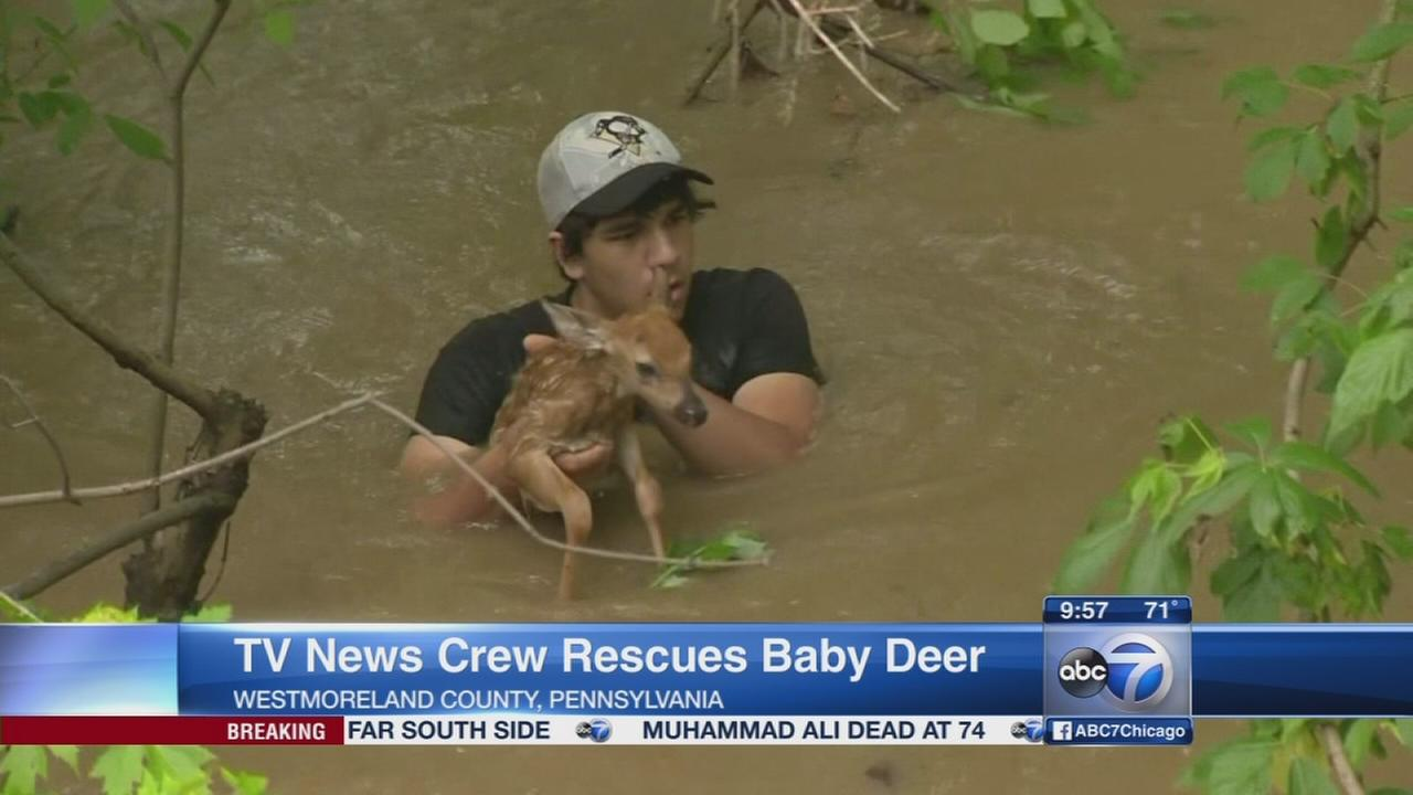 Call for donations after nearly 300 dogs rescued from N.J ...