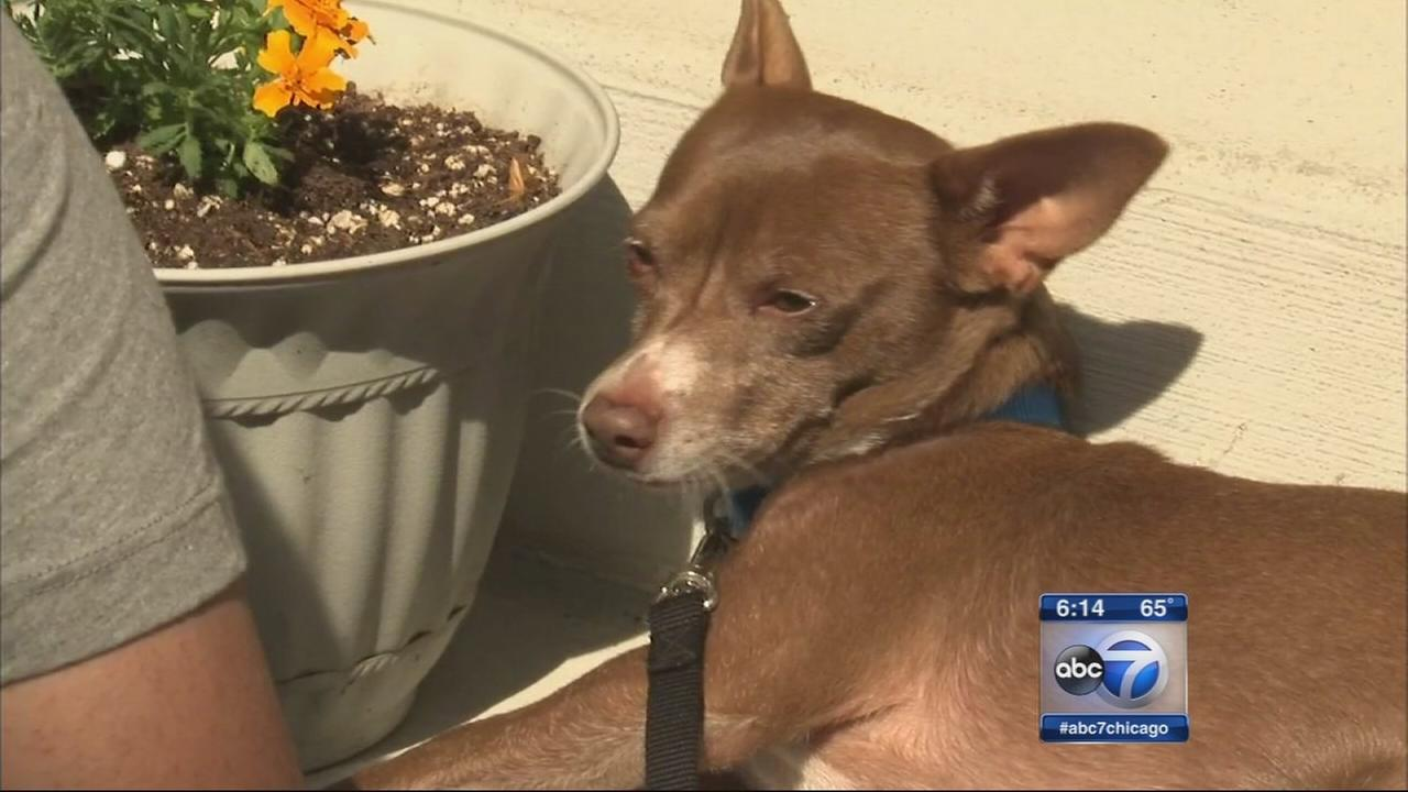 Family reunited with dog after four years