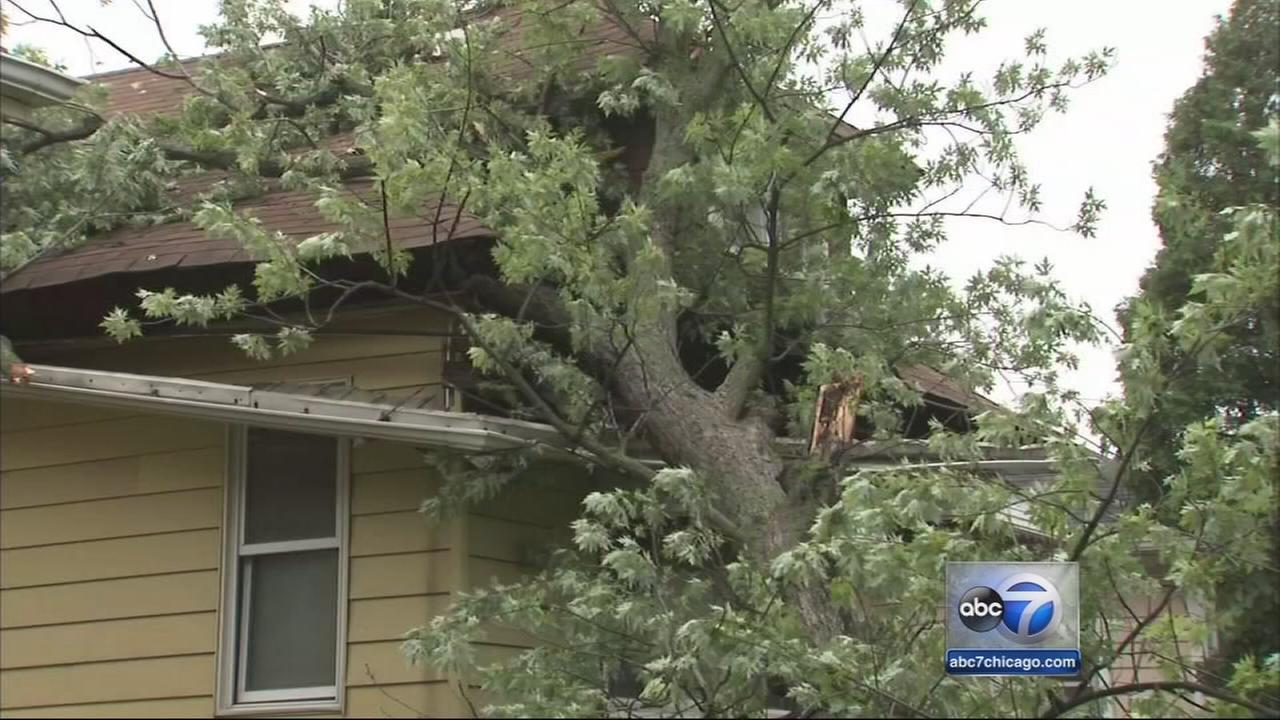 Tree falls on Maywood homes roof during storm