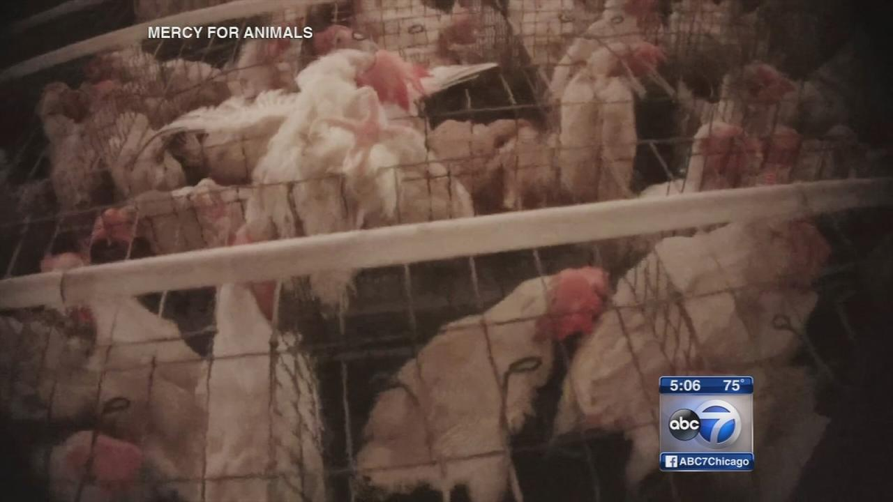 Video shows alleged abuse at egg supplier