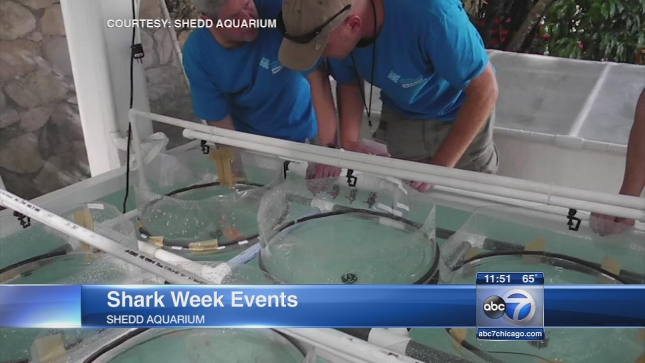 Shark Week events at the Shedd
