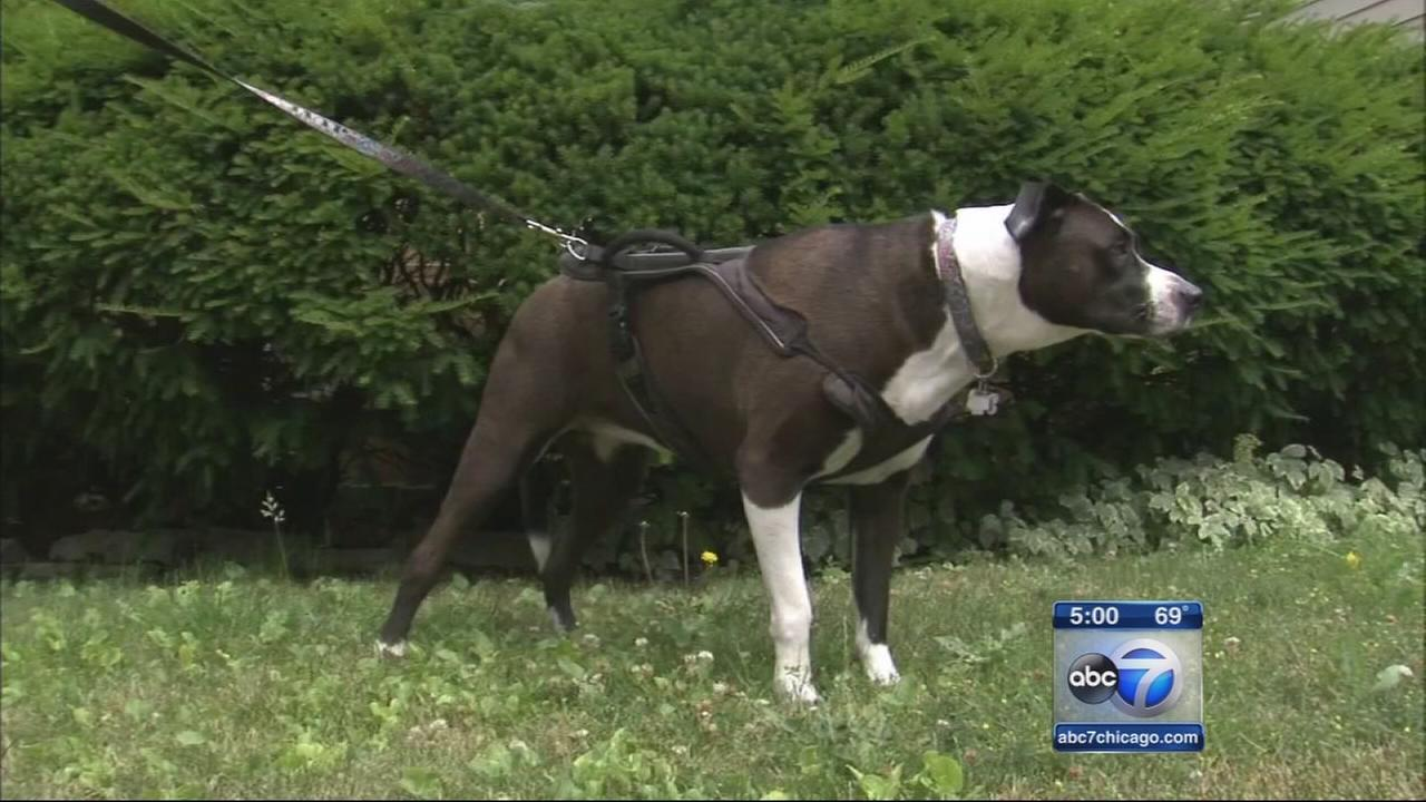 Man blows off hand with fireworks, retrieved by dog