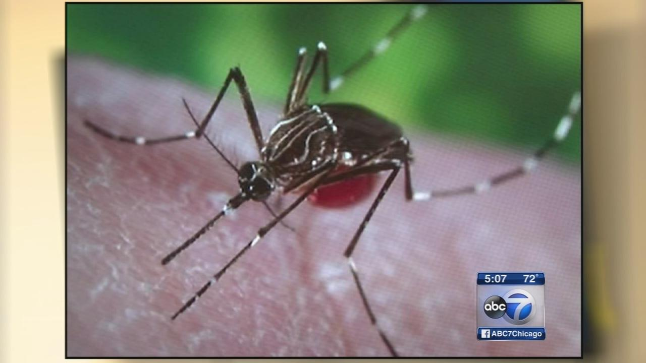 Zika virus not expected to spread to Illinois mosquitoes