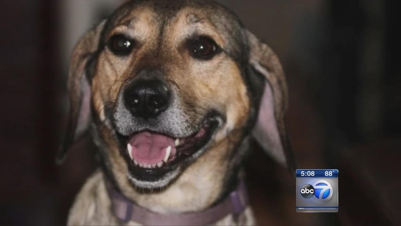 Family sues over missing dog