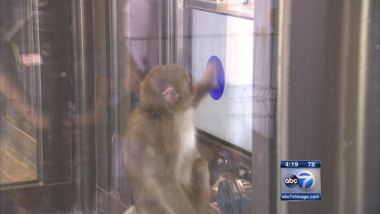 Monkeys dabble in computer research