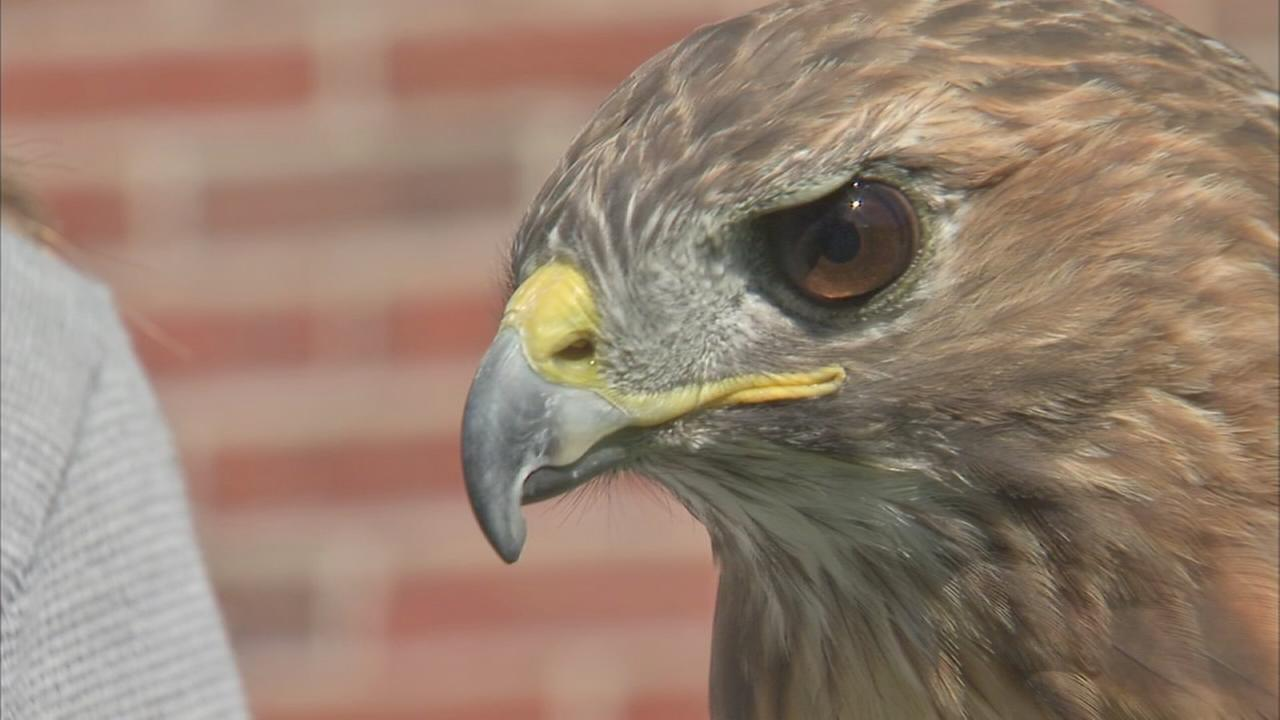 Wildlife Discovery Center is home to injured, rescued birds