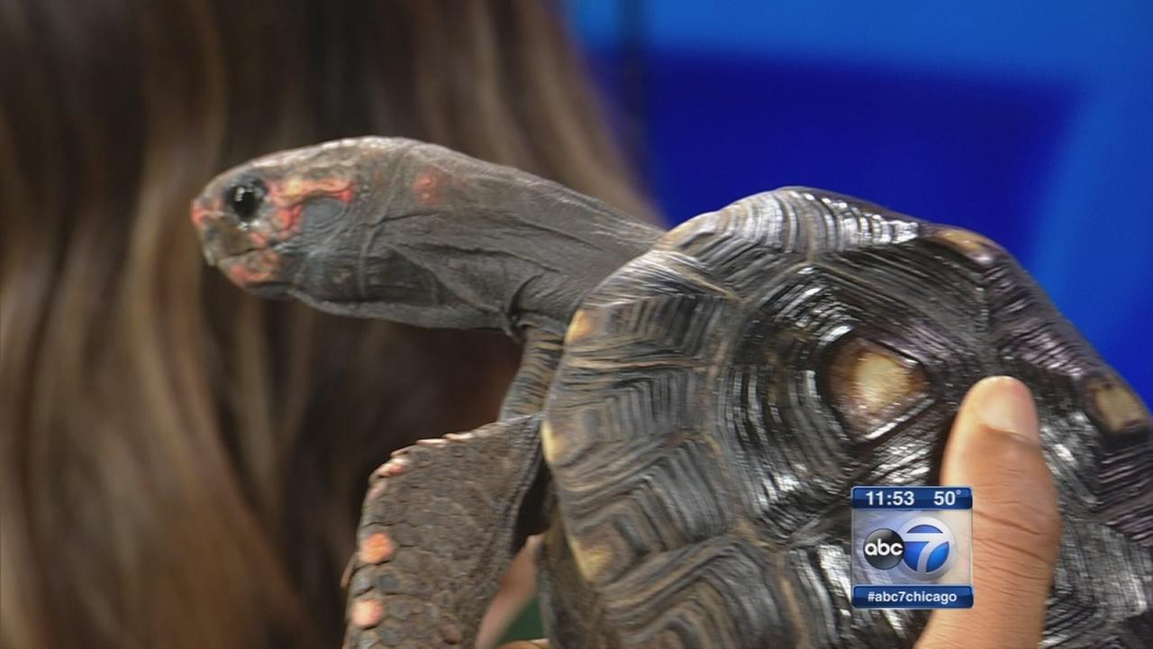 Reptile show coming to Tinley Park this weekend