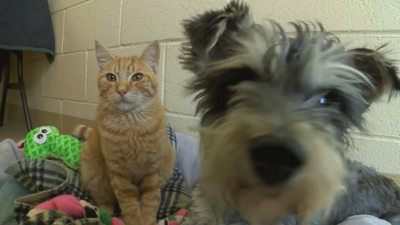 Romeo the cat and Juliet the dog are star-crossed lovers