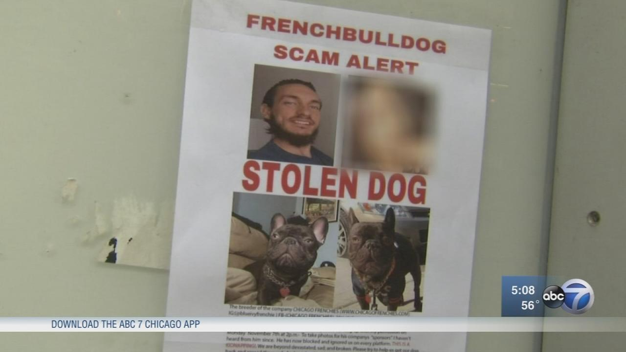 Couple claims breeder took their French bulldog