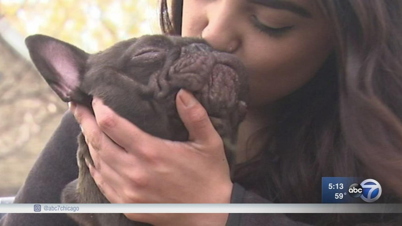 Couple reunited with French bulldog