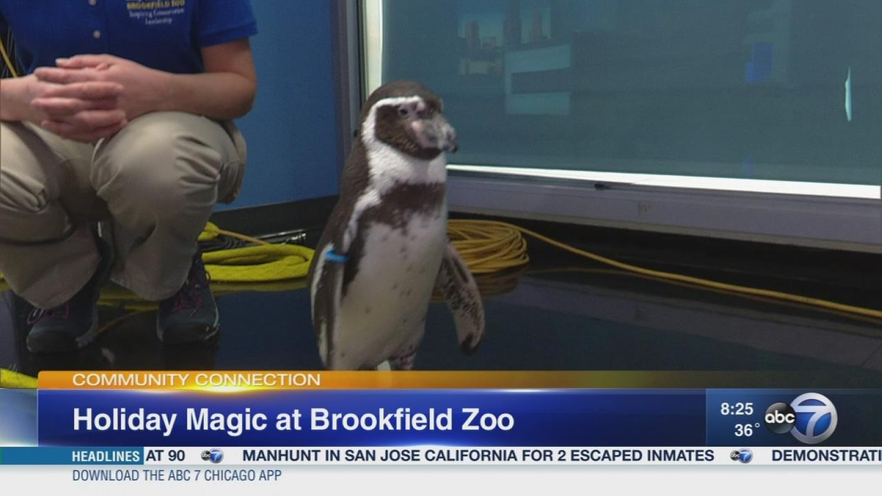 Glowing lights and animal friends at Brookfield Zoo?s Holiday Magic