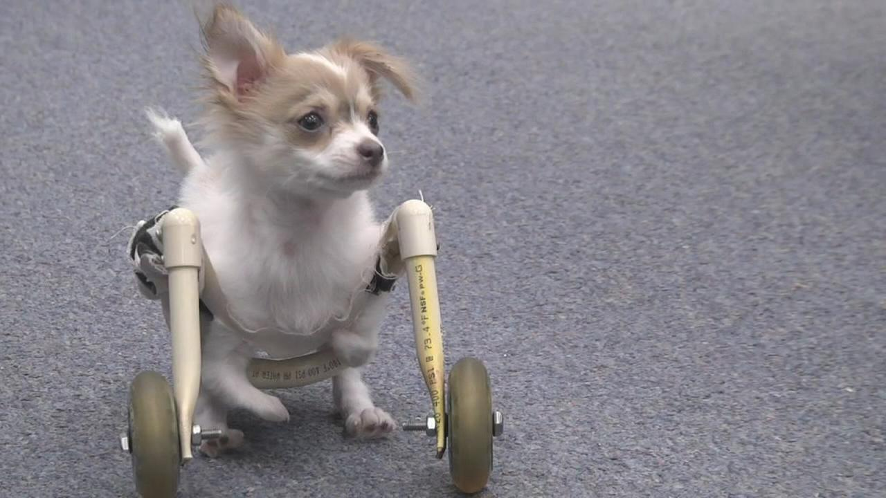 012917-wls-n1-wheelchair-dog-vid