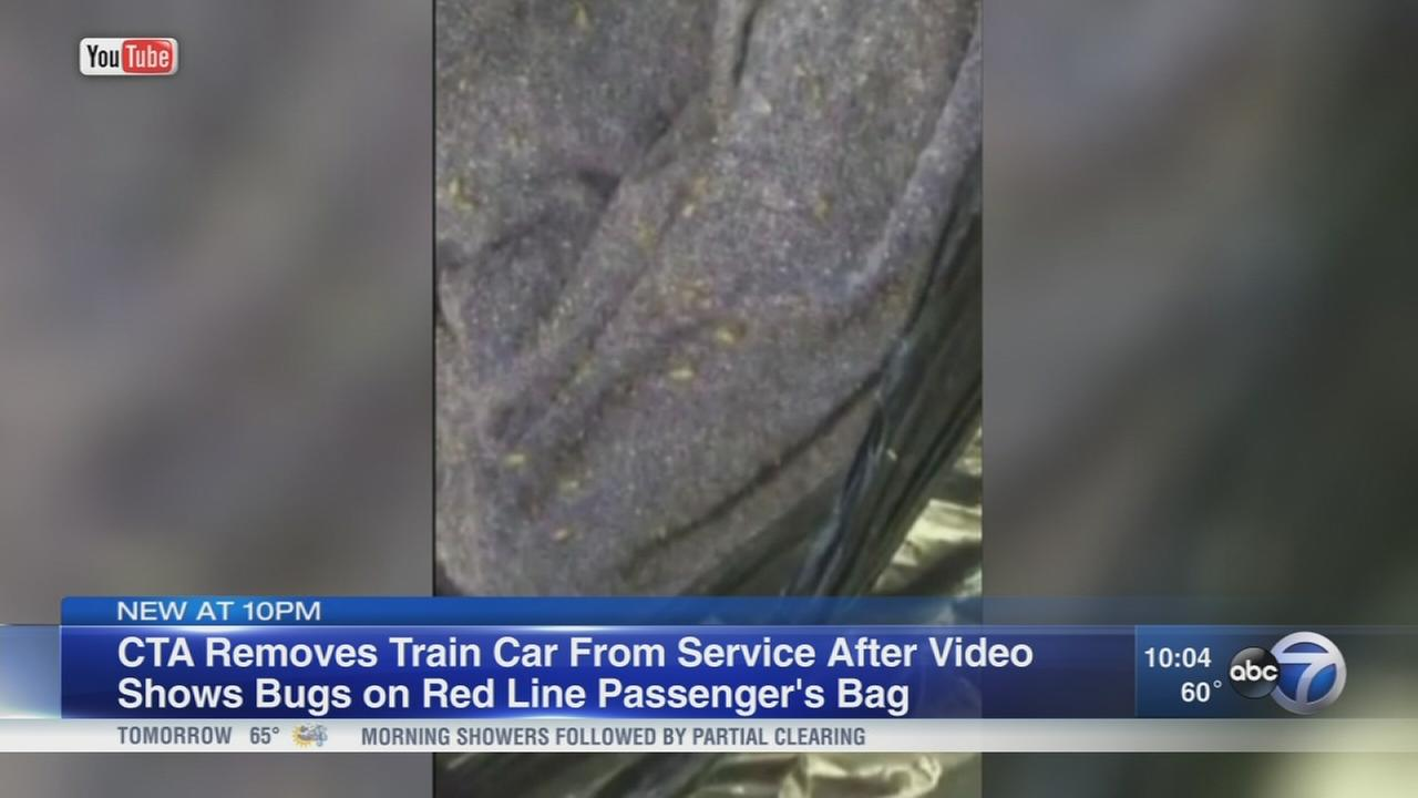 CTA rider says woman carrying bedbug-infested bag got back on train