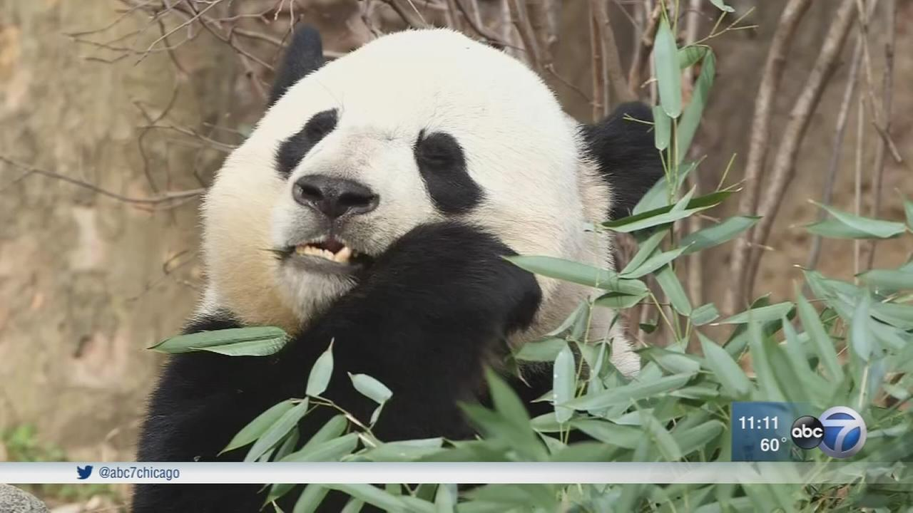 Bao Bao leaves for new home in China