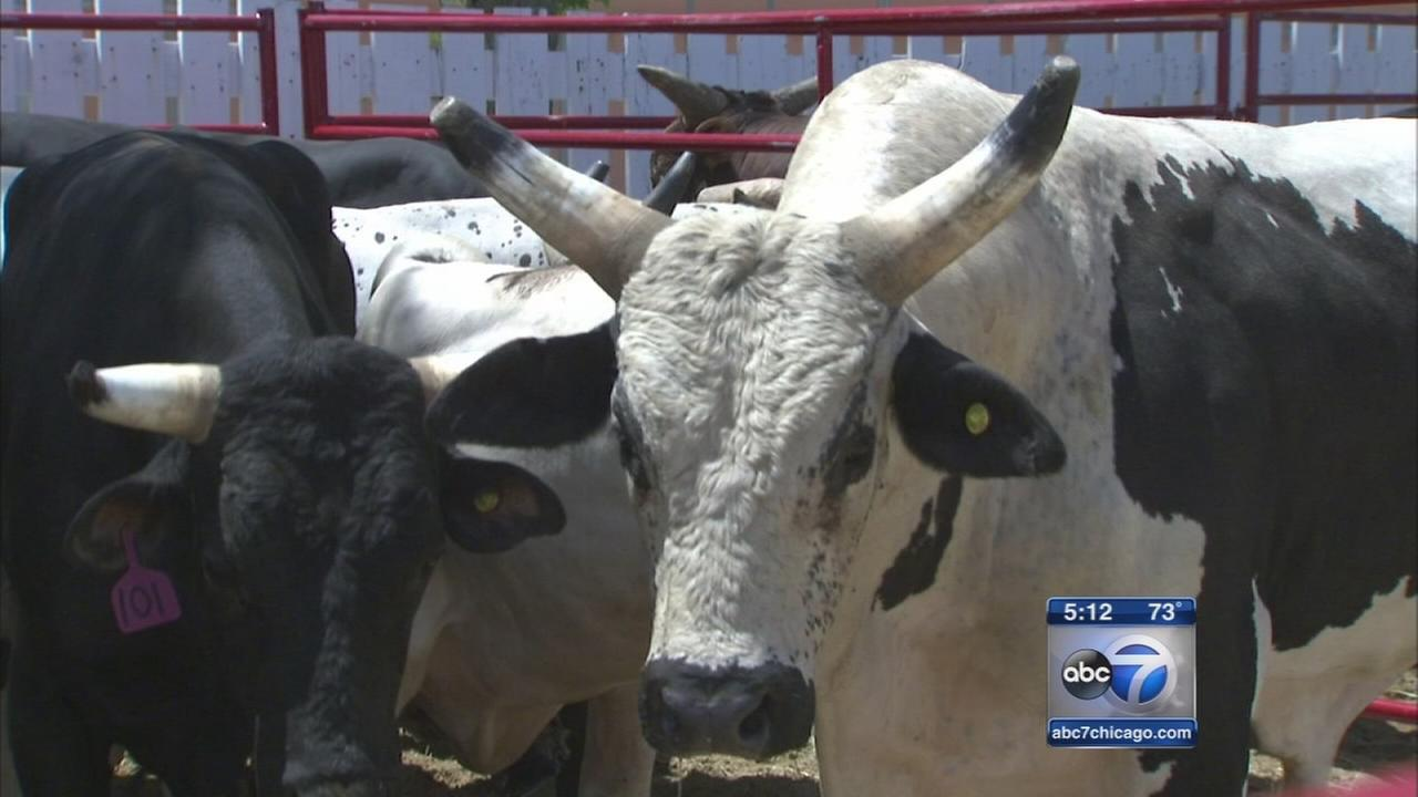 Hawthorne tests Great Bull Run