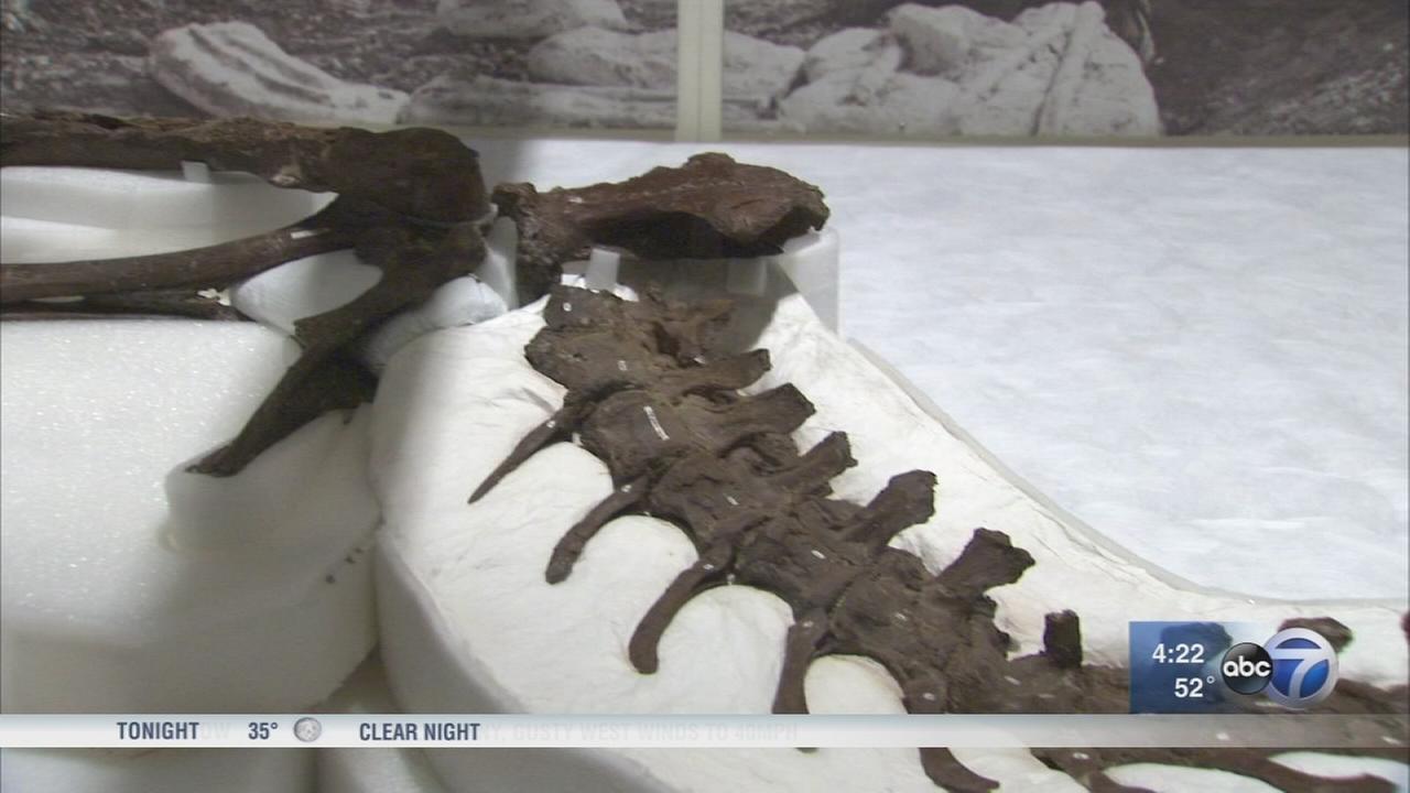 Field Museum opens new exhibit