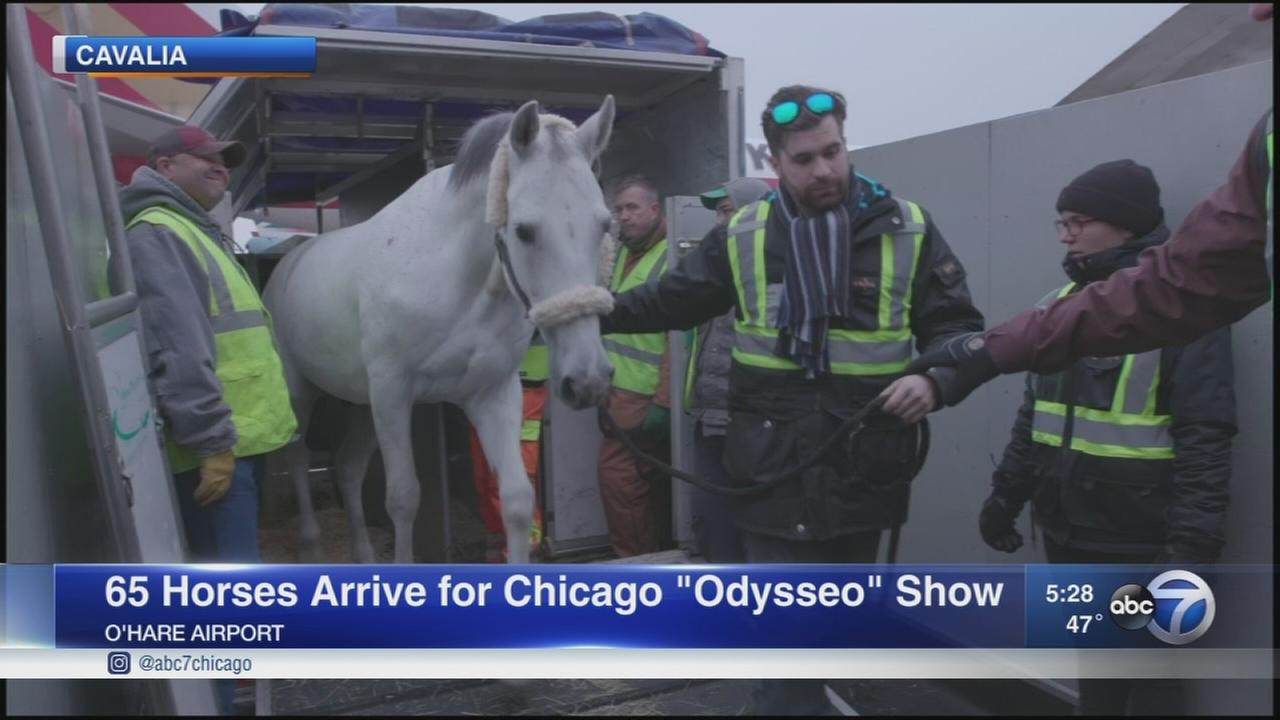 65 Horses arrive for Odysseo show