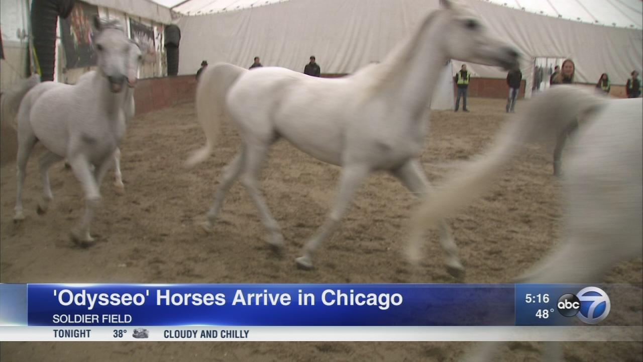 65 horses arrive in Chicago for ?Odysseo? show