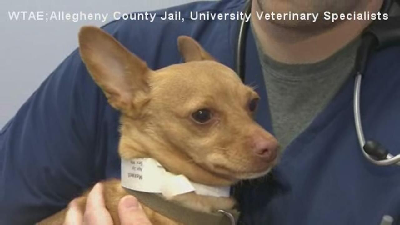 Drunk Chihuahua found in DUI suspect?s car