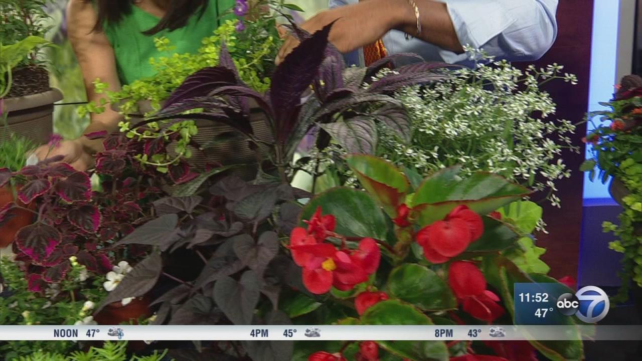 Tips for planting a spring garden