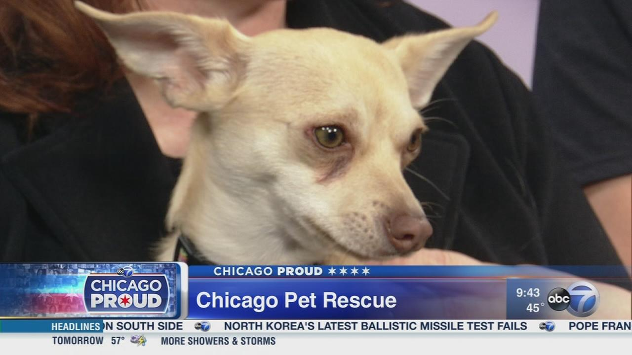 Chicago Pet Rescue hosts Fundraiser
