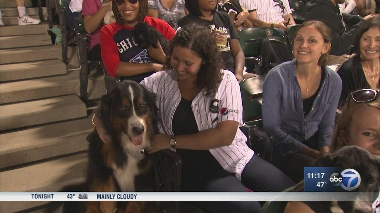 Bring Your Dog to Tuesday?s White Sox game