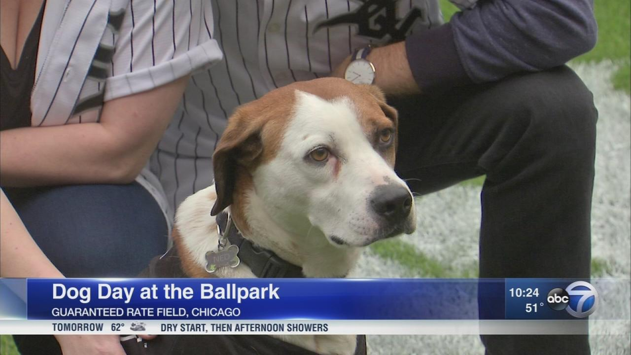 White Sox host dog day at the ballpark