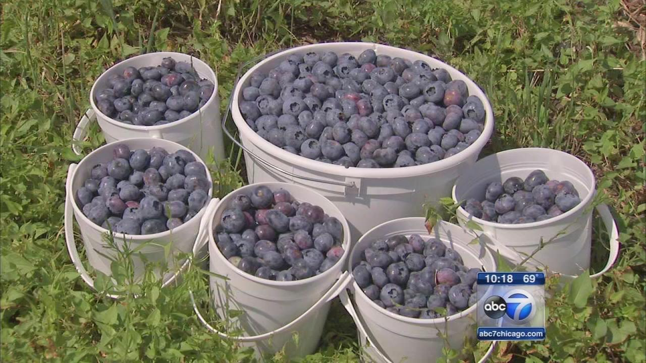 First-ever Blueberry Madness Festival