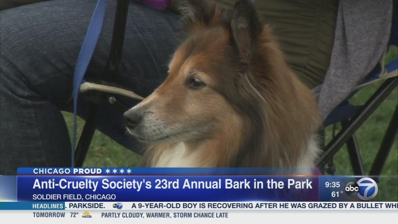 Dogs and their owners excited for Bark in the Park