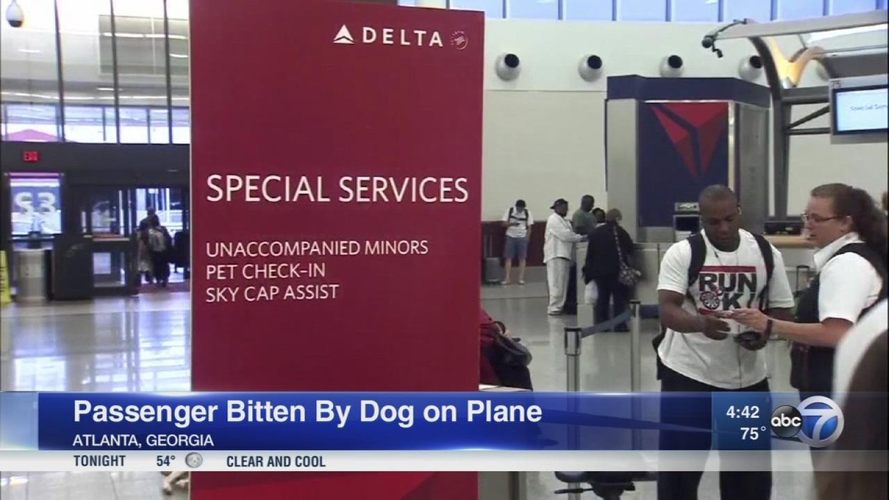 Veterans dog bites passenger on Delta flight