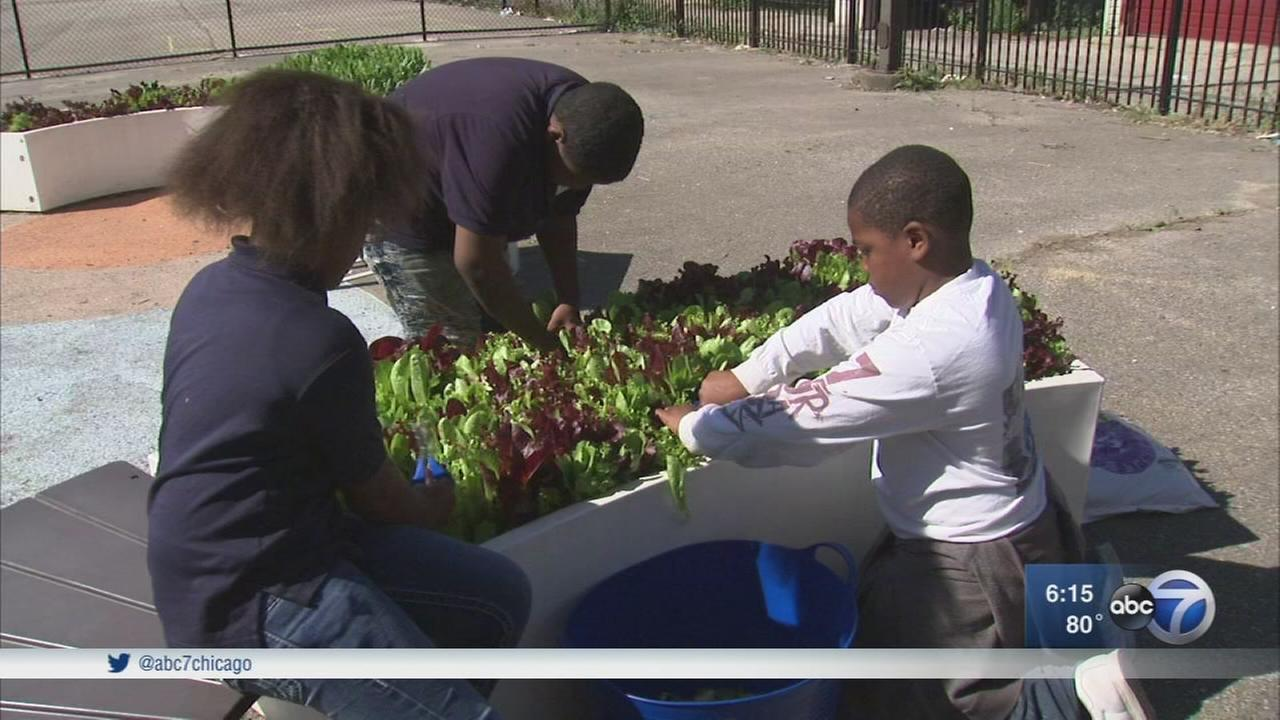 Learning gardens teach children about growing fruits and vegetables