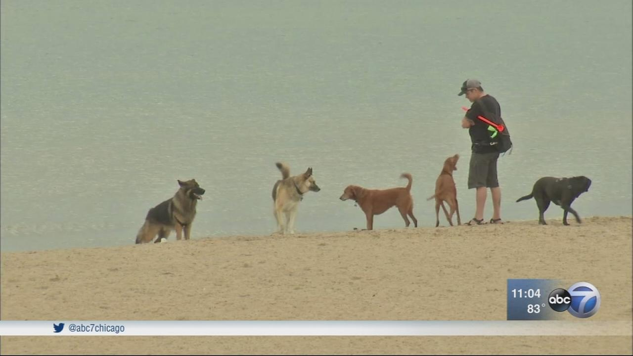 3 shot near Montrose Dag Beach