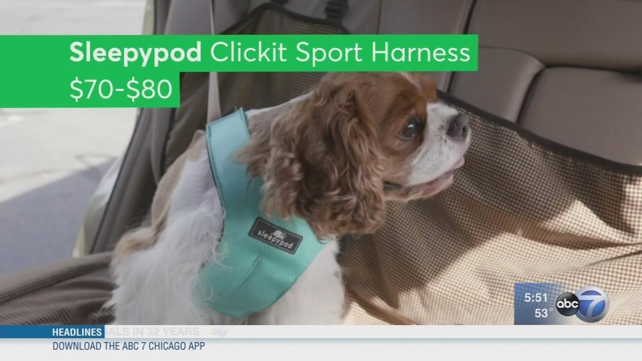 Consumer Reports: Pet travel safety