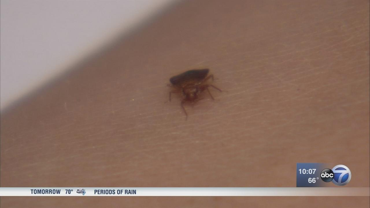 UIC investigating suspected case of bed bugs in dorm