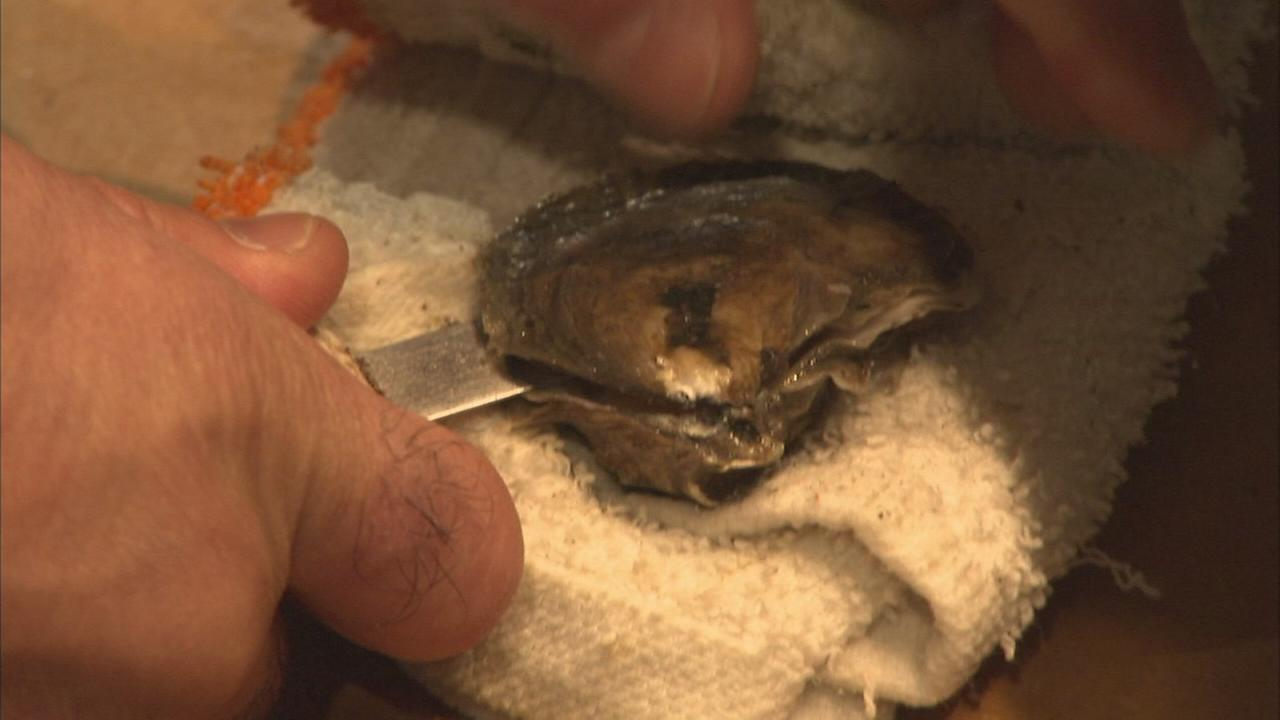 Extra course: Shucking oysters at Shaws Crab House