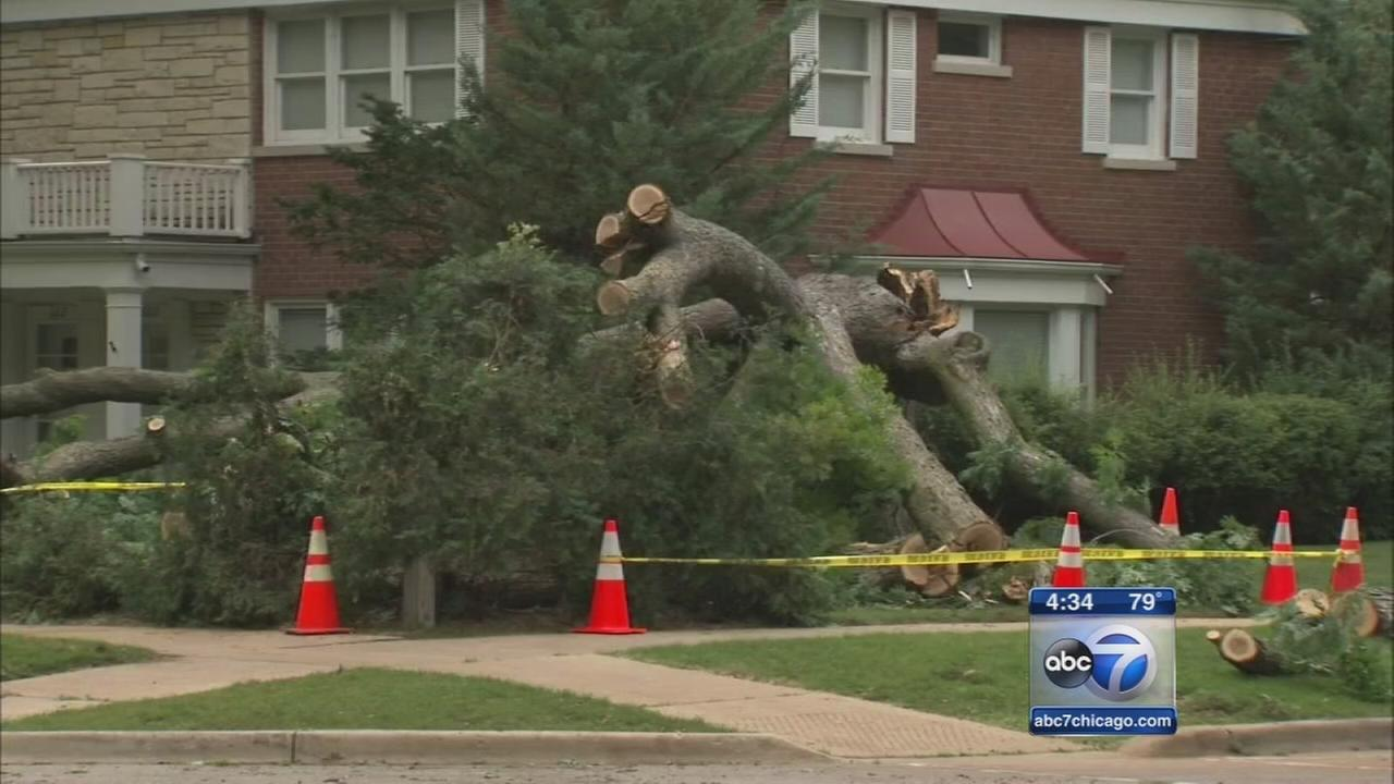Tree falls on woman, dog during walk in Wilmette
