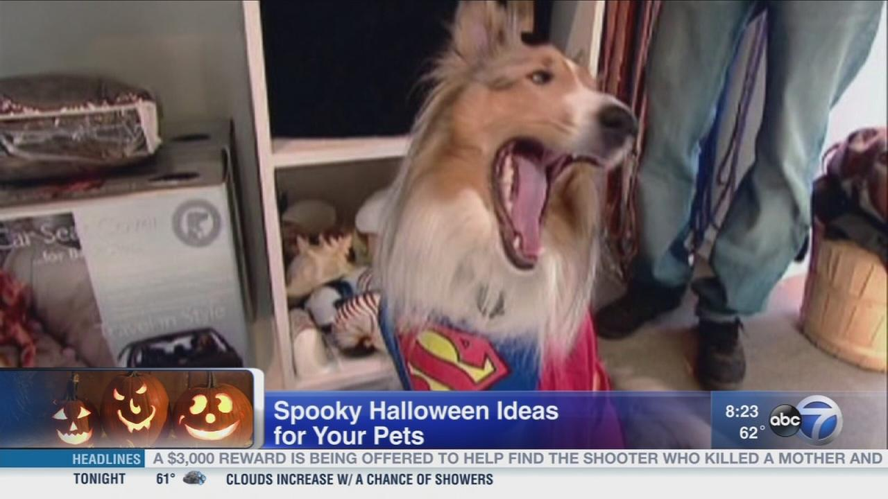 Halloween tricks and treats for pets