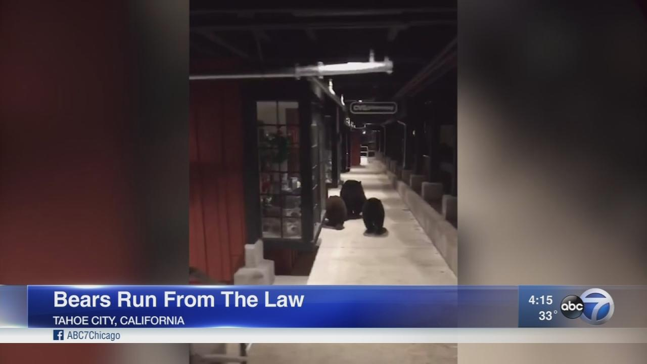 VIDEO: 3 bears run from the law at shopping mall