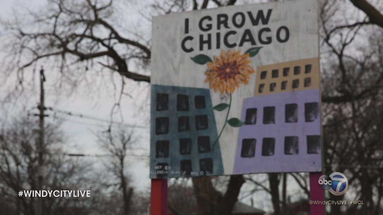 4 Star Chicagoan: I Grow Chicago