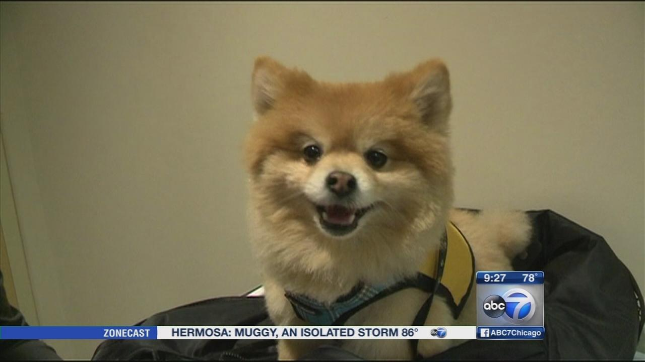 Pet therapy utilized for children with cancer