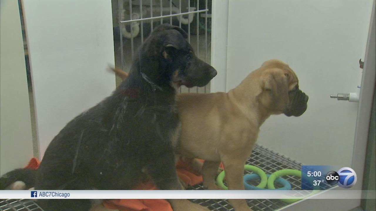 Officials in Will, DuPage counties call for ban on sale of commercially bred pets