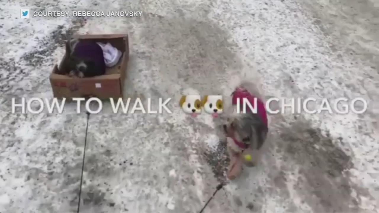 How to walk a dog in winter in Chicago