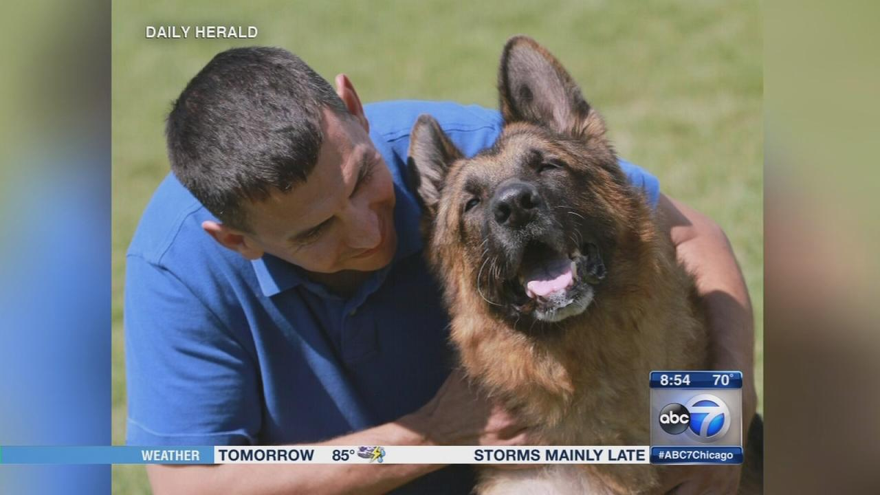 Daily Herald: What happens to retired police dogs?