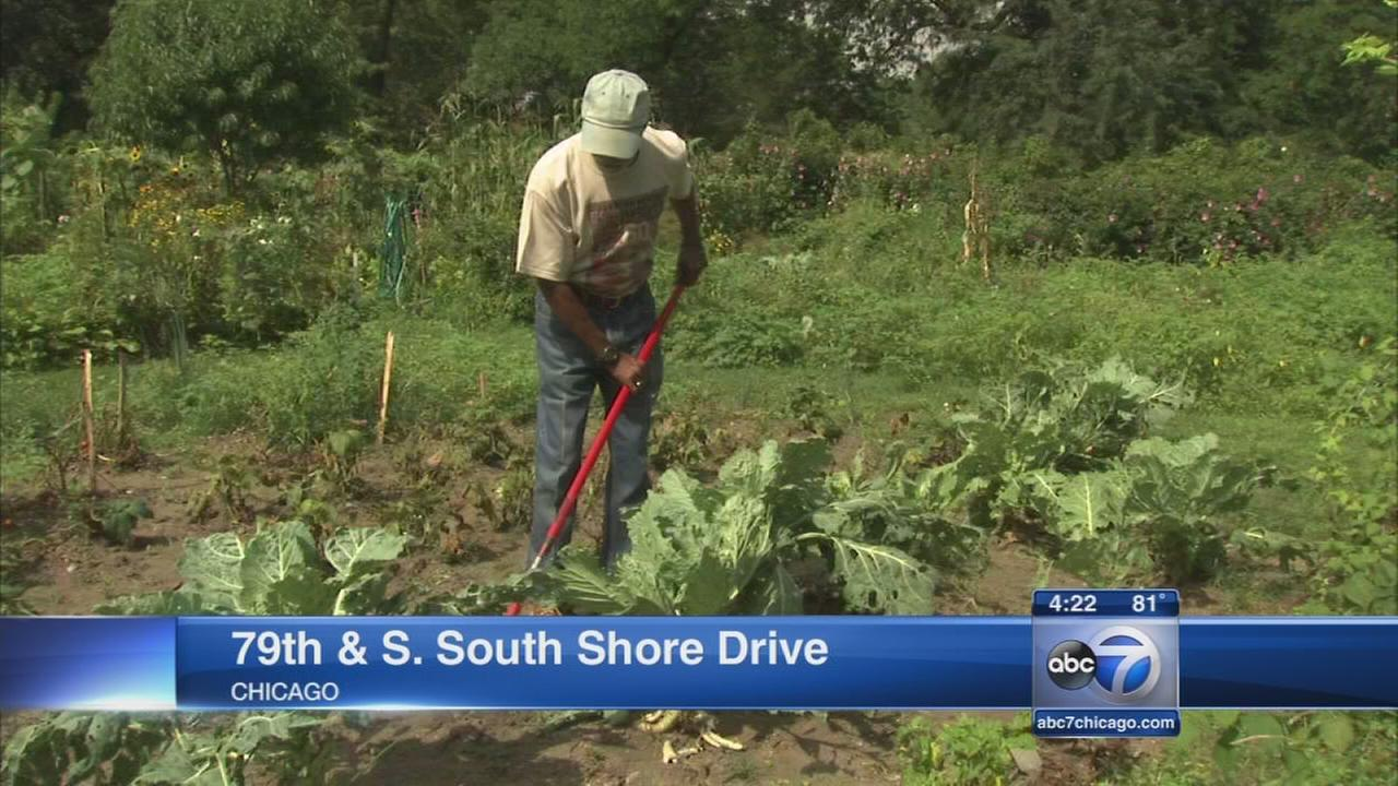 Victory gardens grows in South Shore