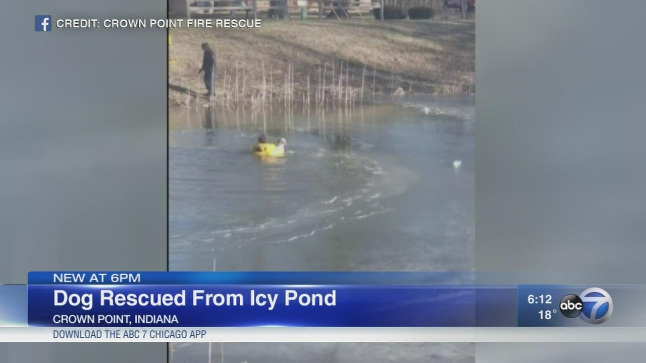 Retired service dog rescued from icy pond