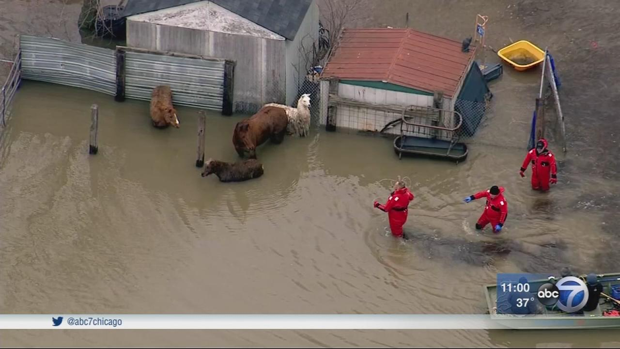 Animals rescued in Lake Station, Ind.