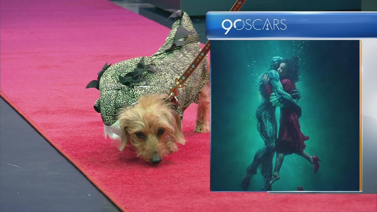 Dogs recreate Best Picture Oscar nominees